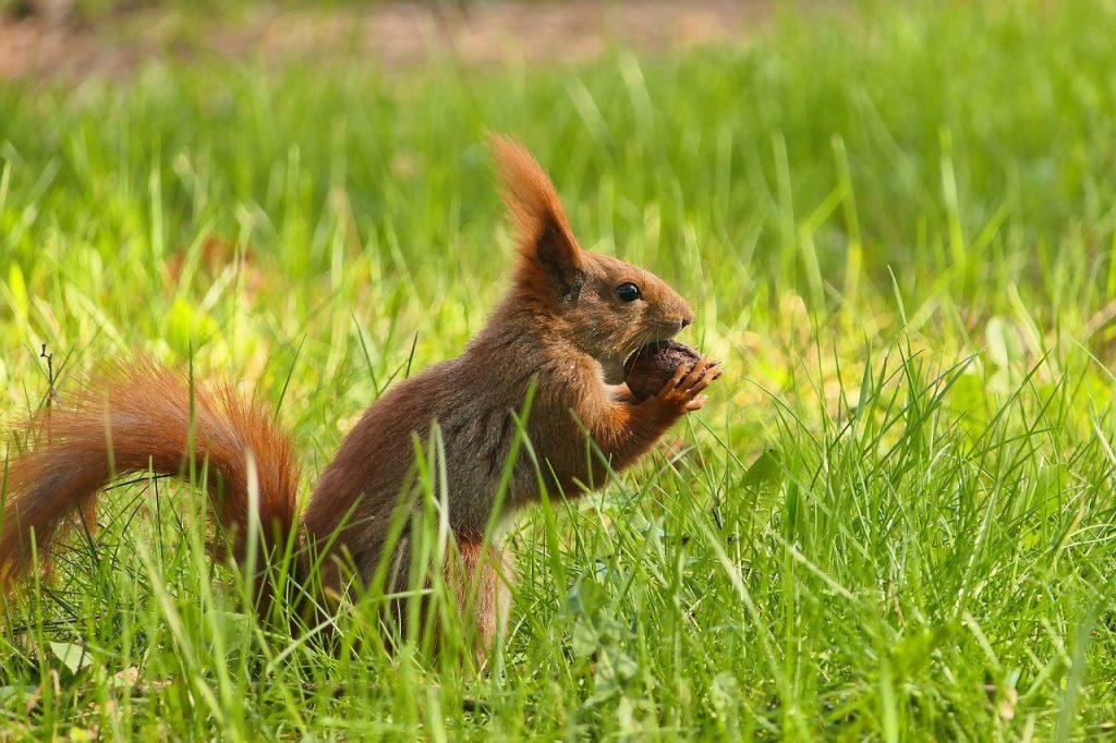 ways to identify your purpose, squirrel, animal, eating