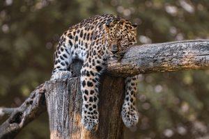get tired while praying
