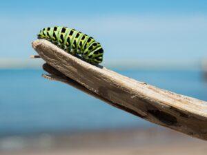 caterpillar, branch, larva-1209834.jpg