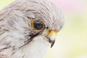 purpose coach in abuja, falcon, bird, stuffed-2339877.jpg